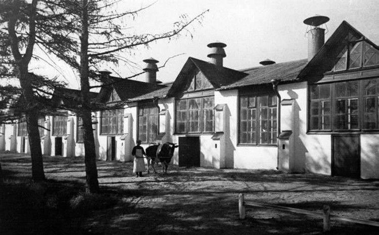 Совхоз «Лесное», 1930-е годы