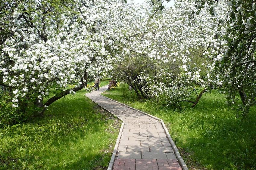 Парки Петербурга для летних прогулок