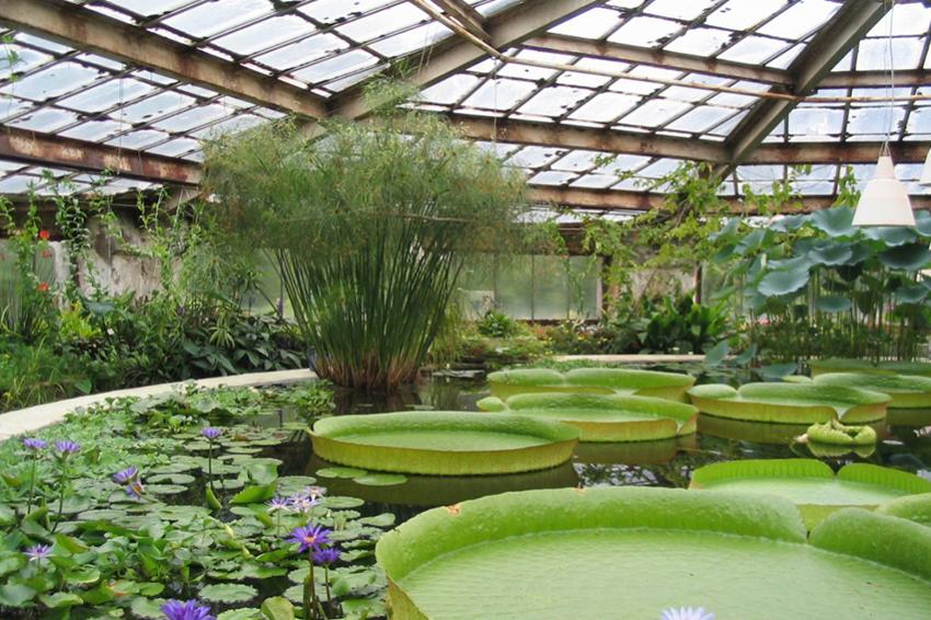 Ботанический сад распродает растения